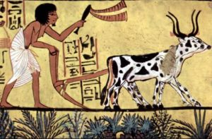Ancient Sumer Agriculture