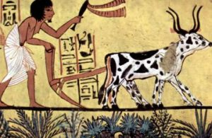 Agriculture in ancient Egypt